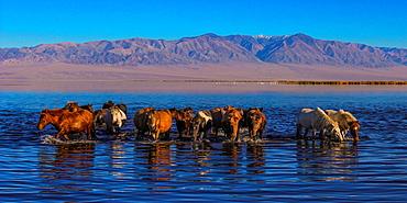 Jargalant Mountain, Chowd-Aimag, Mongolia, Asia