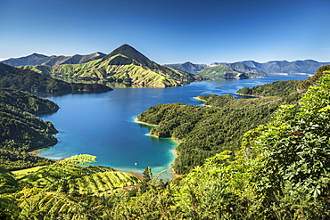 View over the Marlborough Sounds, turquoise sea, Havelock-Picton, Picton, Marlborough, New Zealand, Oceania