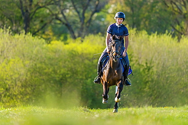 Woman, 24 years, galloping on horse, Germany, Europe