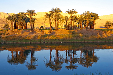 Drainage channel with Coconut palms (Cocos nucifera) are reflected in the water, Luxor, Egypt, Africa