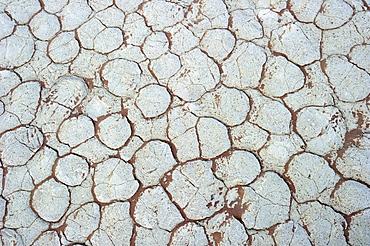 Dried clay soil in Deadvlei, Sossusvlei, Namib Desert, Namib-Naukluft National Park, Namibia, Africa