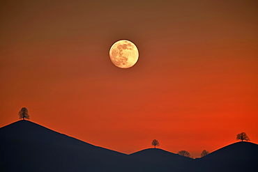 Double exposure, full moon before sunset with trees on moraine hill, Hirzel, Canton of Zurich, Switzerland, Europe