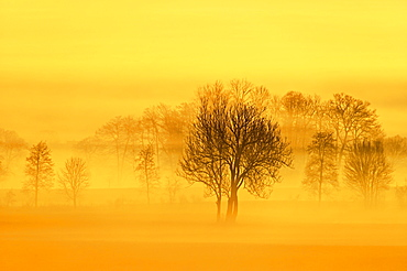 Meadows and trees in early fog, Reusstal, Aristau, Canton Aargau, Switzerland, Europe