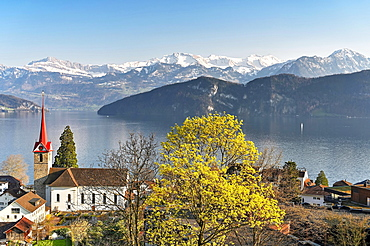 Holiday destination on Lake Lucerne with the parish church of St. Mary behind the snow-covered Alps, Weggis, Canton Lucerne, Switzerland, Europe