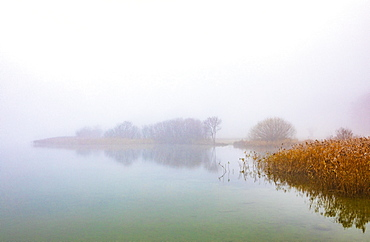 Morning fog on the banks of the Irrsees, Irrsee, Salzkammergut, Upper Austria, Austria, Europe