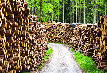 Large piles of wood along a forest road, Stacked logs, Mondseeland, Salzkammergut, Upper Austria, Austria, Europe