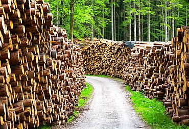 Large piles of wood along a forest road, Stacked logs, Mondseeland, Salzkammergut, Upper Austria, Austria, Europe
