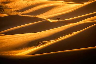 Beautiful light in Khongor sand dunes. Umnugobi province, Mongolia, Asia
