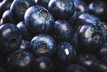 Blueberries, black background, studio shot, Austria, Europe