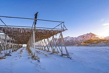Wooden frame with stockfish in winter at sunset, mountains, Vesteralen, Hovden, Nordland, Norway, Europe