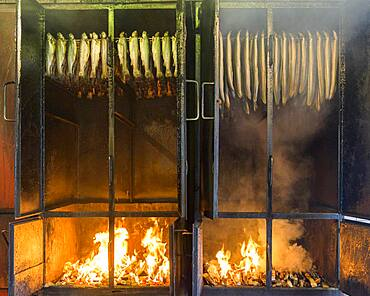 Smoked Fotrellen and eels in the smoking oven, smoking oven, smoking plant, smoked fish, edible fish, Duemmerlohhausen, Lower Saxony, Germany, Europe