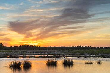 Sunset at a bog pond, Goldenstedter Moor, Oldenburger Muensterland, Lower Saxony, Germany, Europe