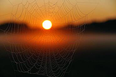 Sunrise, cobweb with morning dew and ground fog, North Rhine-Westphalia, Germany, Europe