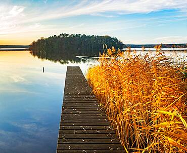 Footbridge in the reeds at the Great Lychen Lake in autumn, Lychen, Brandenburg, Germany, Europe