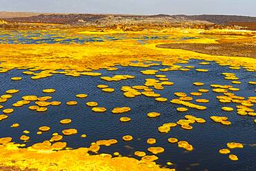 Geothermal area with sulphur deposits and acidic brines, Dallol, Danakil depression, Ethiopia, Africa