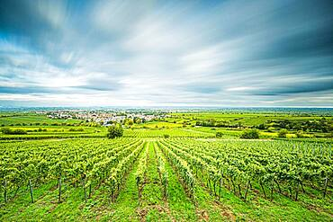 View over vineyards to Deidesheim, Palatinate, Rhineland-Palatinate, Germany, Europe