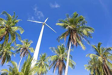 Wind turbine surrounded by palm trees, Koh Tao, Thailand, Asia
