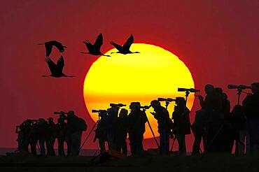 Nartur friends with telescopes in front of setting sun, cranes flying by, Mecklenburg-Vorpommern, Germany, Europe