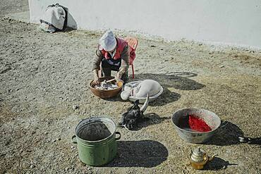 Jamalgan, woman of eagle hunter Bashakhan Spai, cleans the intestines and stomach of a slaughtered goat, Kisil Char, Olgii, Mongolia, Asia