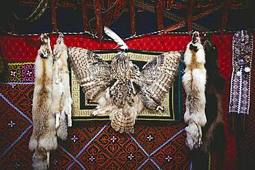 Trophies of the eagle hunter Bashakhan Spai, fox, tanuki and owl, the fox skins he sells at the bazaar in Olgii, the owl he keeps as a decoration object for his yurt, Kisil Tschar, Olgii, Mongolia, Asia