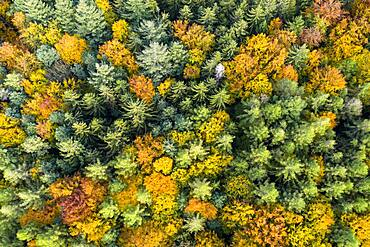 UAV recording, Baden-Wuerttemberg, mixed forest, autumn in the Rems valley, Germany, Europe