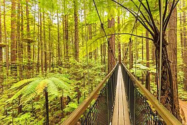Redwood Treewalk, Oceania, Treetop Walk, Rotorua, Bay of Plenty, North Island, New Zealand, Oceania