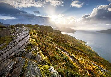 Sun breaks through dramatic clouds on the fjord with rocks and coloured moss in autumn, Nesna, Nordland, Norway, Europe