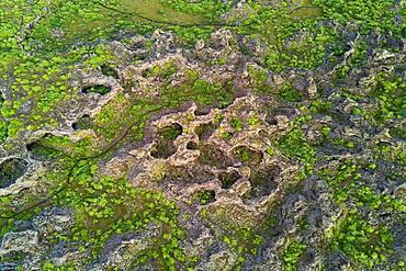 Aerial view of the lava field Dimmuborgir, Skutustaoir, Norourland eystra, Iceland, Europe