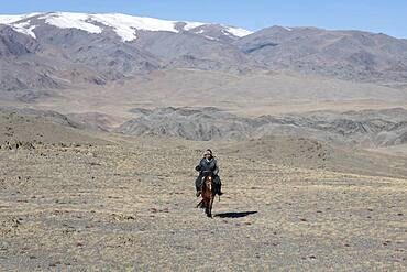Cattle herder on his horse in the Altai mountains, Olgii province, Mongolia, Asia
