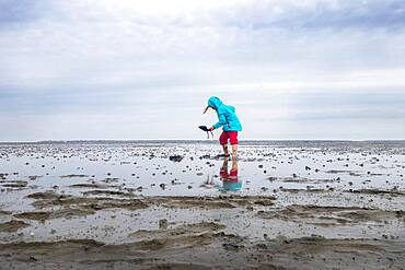 Child playing in the mudflats, mudflat hiking tour, Lower Saxony Wadden Sea National Park, East Frisia, Lower Saxony, Germany, Europe