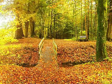 The Stikelkamp Forest Ecosystem at Gut Stikelkamp, Leer County, East Frisia, Germany, Europe