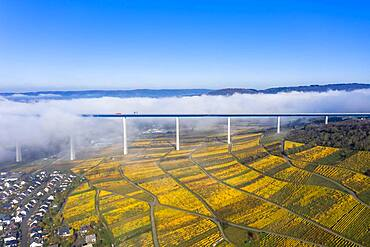 Aerial view, Hochmosel bridge over river Moselle, vineyards in autumn, Zeltingen, Rachtig, Rhineland-Palatinate, Germany, Europe