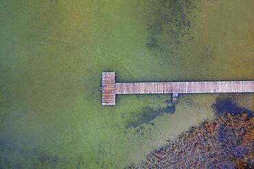 Bathing jetty with reed belt at Mondsee, drone photo, aerial view, Mondseeland, Salzkammergut, Upper Austria, Austria, Europe