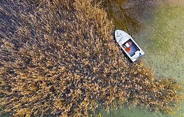 Fishing boat at the reed belt of the Irrsee, from above, drone photo, aerial view, Zell am moss, Mondseeland, Salzkammergut, Upper Austria, Austria, Europe