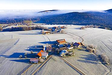 Farms in the middle of meadows covered with hoar frost, agricultural landscape, From above, aerial view, drone photo, Mondsee, Mondseeland, Salzkammergut, Upper Austria, Austria, Europe