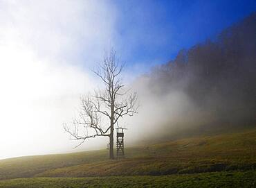 Hunter's high seat at the edge of the forest in the morning fog, Mondseeland, Upper Austria