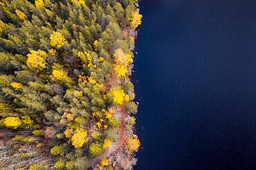 Aerial view, autumnal forest and lake, resting places Angersjoen, Hudiksvall, Sweden, Europe