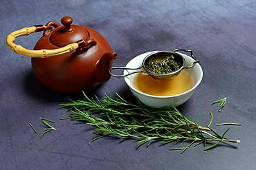 A cup of rosemary tea with tea strainer, teapot, Germany, Europe