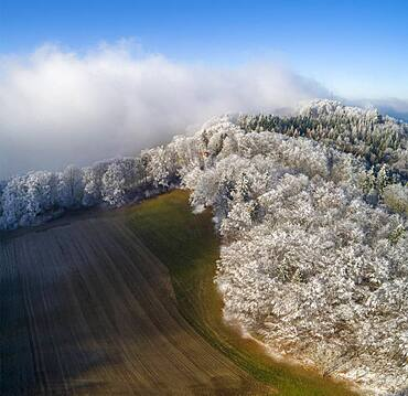 Aerial view, hoarfrost at the edge of the forest, Schafmatt, Basel-Landschaft, Switzerland, Europe