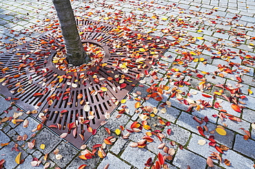 Grating for tree protection with autumn leaves, Kempten, Allgaeu, Upper Swabia, Swabia, Bavaria, Germany, Europe