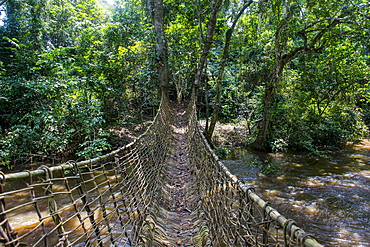 Hand made vine bridge in the Unesco world heritage sight Dzanga-Sangha Park Central African Republic