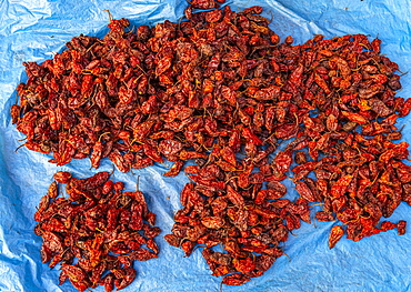 King Chili (U-Morok), hottest chilli in the world, Ima Keithel women´s market, Imphal, Manipur, India, Asia