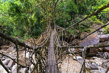Living Root Bridge, Sohra or Cherrapunjee, Meghalaya, India, Asia