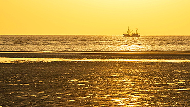 Crab cutter in the mudflats at evening light, sunset on the beach at low tide, Wadden Sea National Park, North Sea, North Frisia, Schleswig-Holstein, Germany, Europe