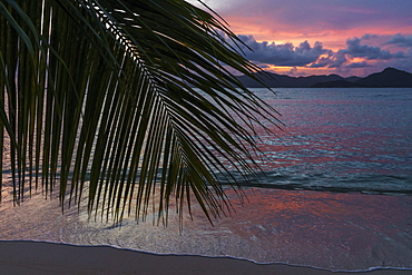 Palm fronds in the sunset, La Digue, Seychelles, Africa