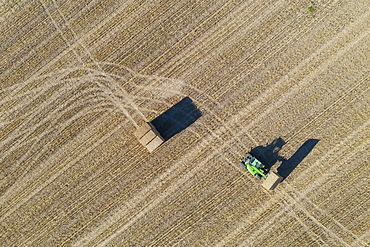 Tractor collecting bales of straw and abstract patterns in cornfield after wheat harvest, aerial view, drone shot, Cordoba province, Andalusia, Spain, Europe