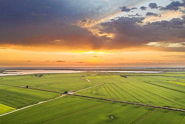 Rice fields (Oryza sativa) and lagoons at sunrise in July, aerial view, drone shot, Ebro Delta Nature Reserve, Tarragona province, Catalonia, Spain, Europe