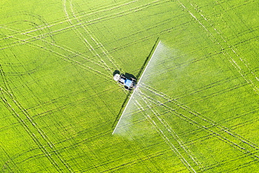 Tractor spraying fungicide onto the rice fields (Oryza sativa), in July, aerial view, drone shot, Ebro Delta Nature Reserve, Tarragona province, Catalonia, Spain, Europe