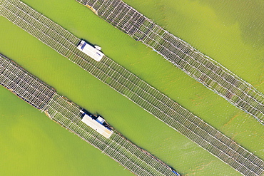 Mussel and oyster farming in the Bahia del Fangar, aerial view, drone shot, Ebro Delta Nature Reserve, Tarragona province, Catalonia, Spain, Europe