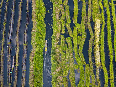 Aerial of the floating gardens, Inle lake, Shan state, Myanmar, Nyaungshwe Township, Shan State, Myanmar, Asia